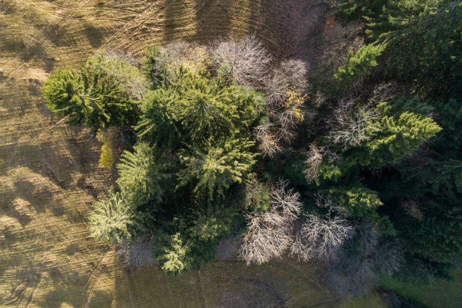 Bäume im Mostelberg, Sattel