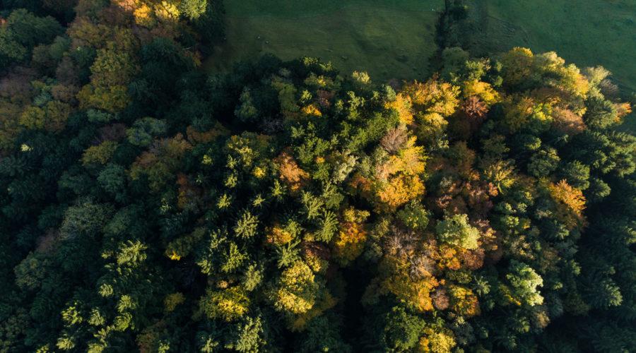 Grundeigentum Trubenberg, Goldau, mit Wald