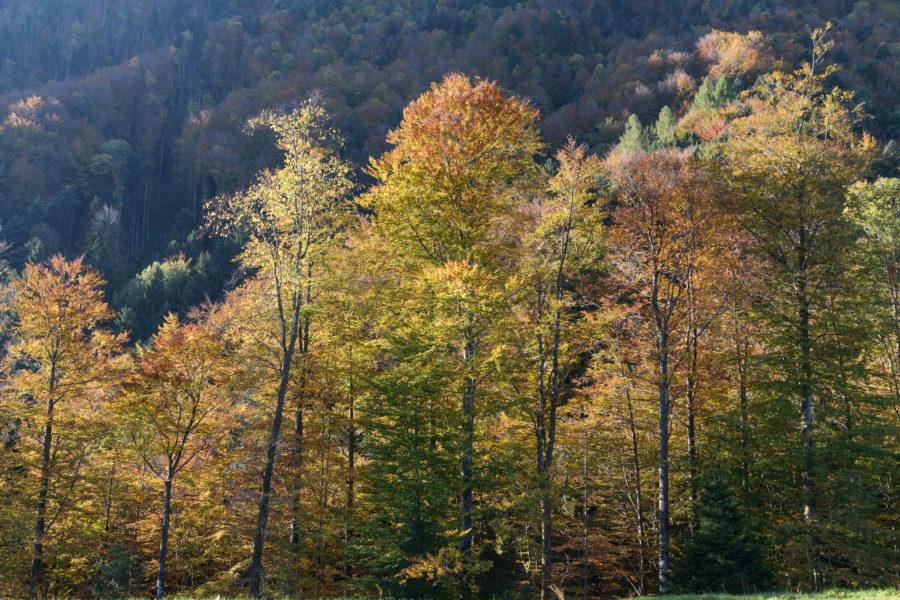 Wald im Trubenberg, Goldau