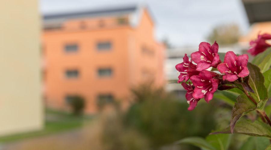 Immobilie Heuledi Oberarth: Detailaufnahme mit Blume im Vordergrund