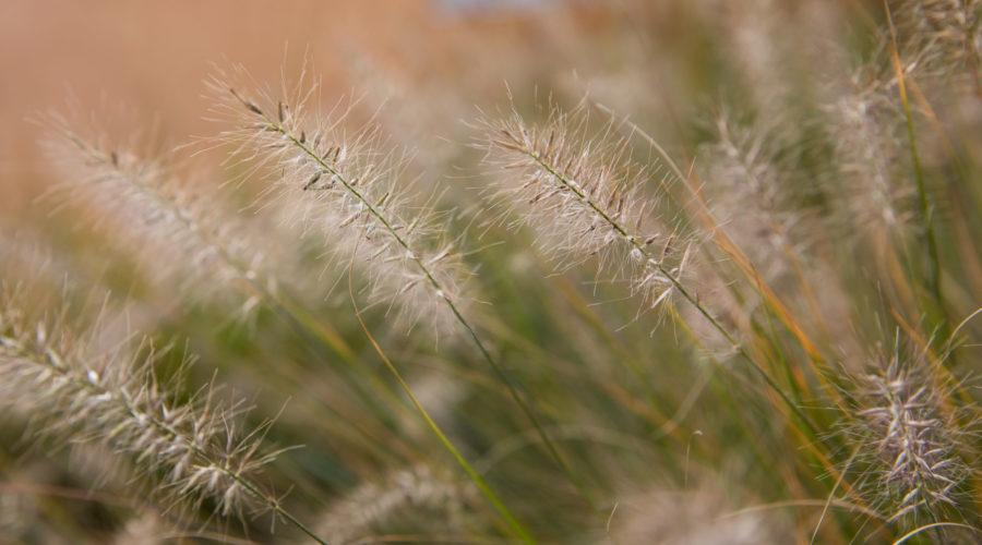 Immobilie Heuledi Oberarth: Detailaufnahme mit Grass im Vordergrund