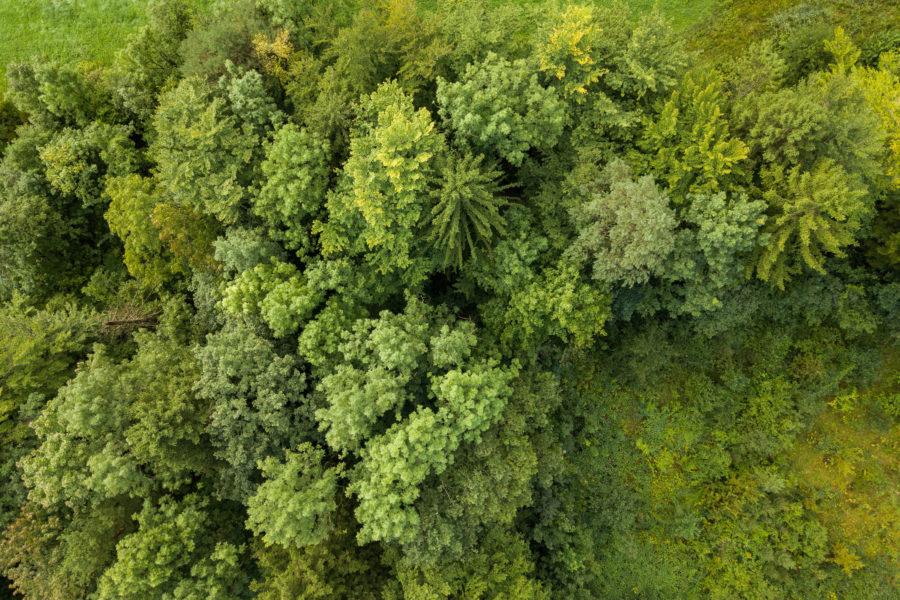 Schuttmattli Goldau Bäume von oben