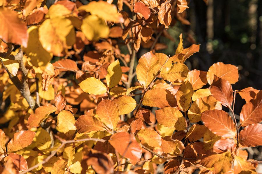 Herbstlaub im Mostelberg