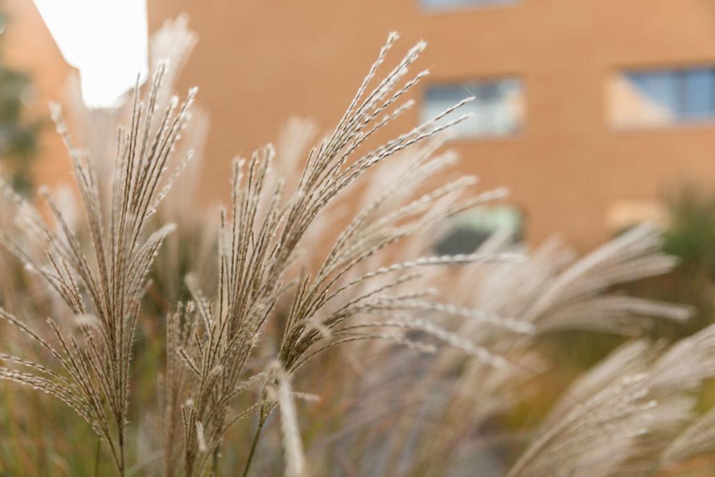 Mietwohnungen Heuledi Oberarth: Gras